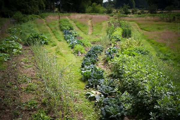 d couvrir le jardin vivant le jardin vivant