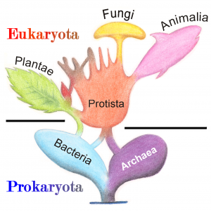 Tree_of_Living_Organisms_2