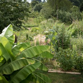 Le jardin vivant le 3 aout 2016