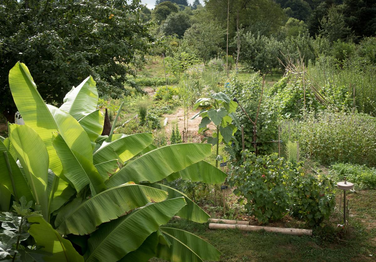 le jardin vivant 3 aout 16 le jardin vivant. Black Bedroom Furniture Sets. Home Design Ideas
