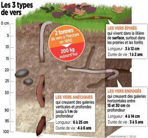 Première biomasse animale du sol, LA TERRE RESPIRE et S'ENRICHIT grâce à eux. Aussi, ce simple dessin pour illustrer que MÊME UNE GRELINETTE doit être utilisée avec parcimonie car son action détruit l'habitat des laboureurs.