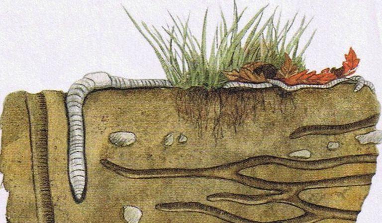 Le ver de terre, de l'azote en barre !