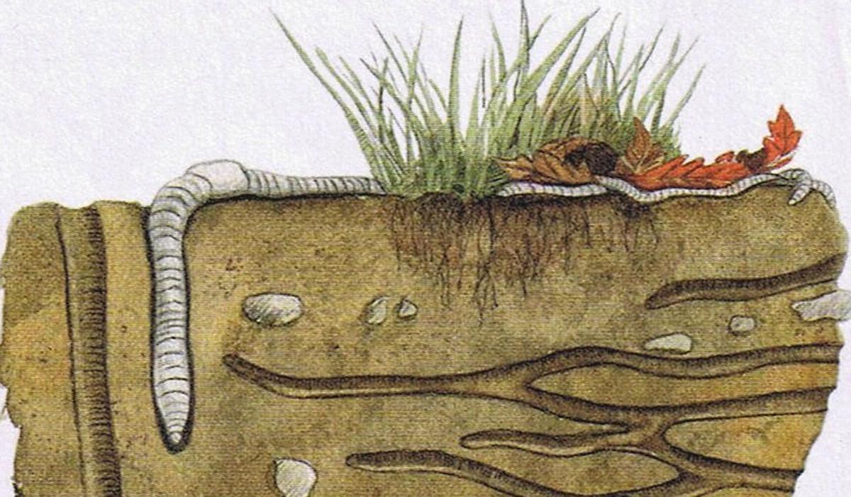 Le ver de terre nous le dit coutons le le jardin vivant for Le jardin vivant