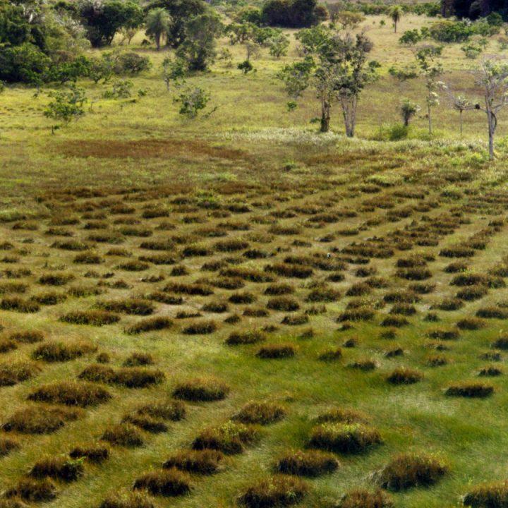 Le jardin vivant toute l 39 actualit du cultivateur for Creer une butte permaculture