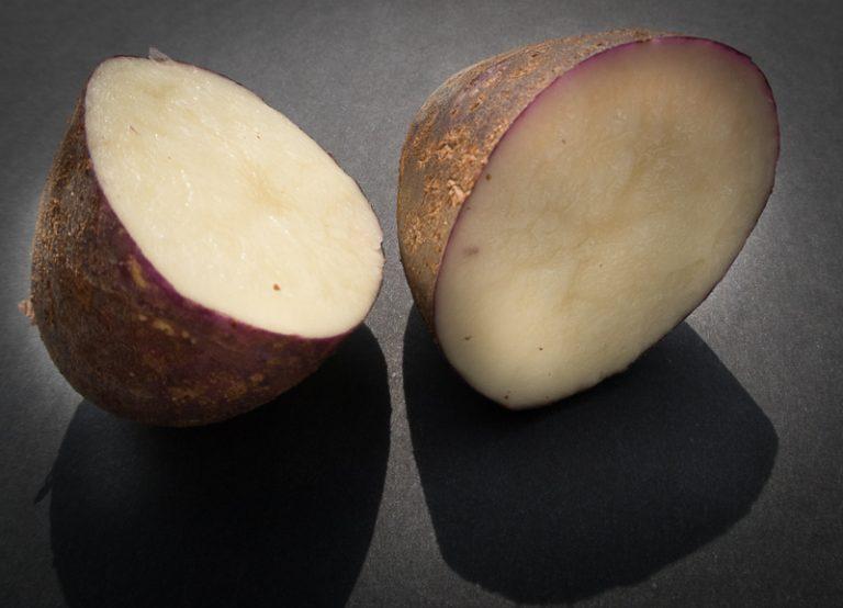 Banc d'essai : 9 variétés de pommes de terre dites résistantes au mildiou