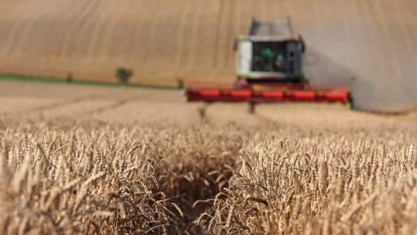 L'agriculture biologique ne peut pas nourrir la planète en l'état