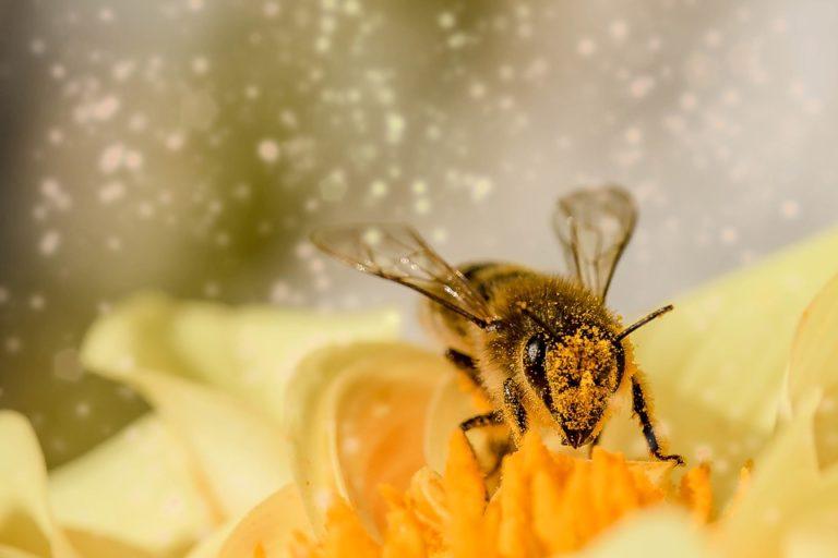 Les insectes ont-ils une personnalité, ou uniquement celle de leur espèce ?