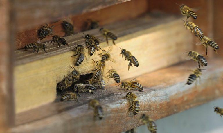 Et si la mort des abeilles n'était pas due qu'aux pesticides…