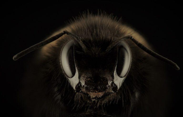 Mortalité des abeilles, le problème, c'est le plafond de verre !