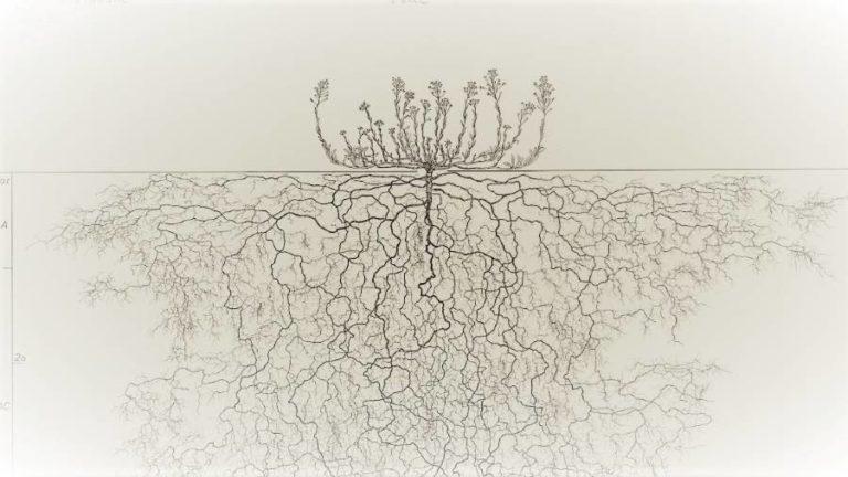 Dans les coulisses du vivant, les racines