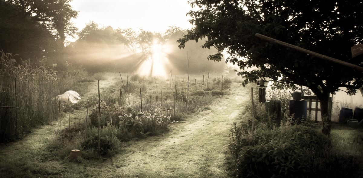 Newsletter du solstice du soleil levant le jardin vivant for Le jardin vivant