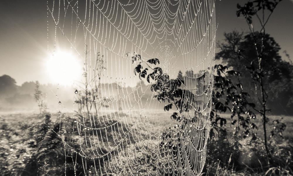 l 39 araign e une esp ce prot ger le jardin vivant. Black Bedroom Furniture Sets. Home Design Ideas