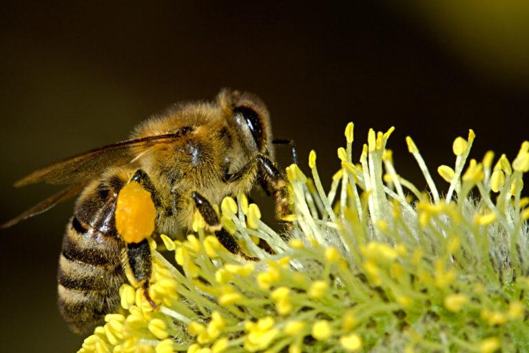 Changement climatique : les abeilles déboussolées par la nouvelle odeur des fleurs