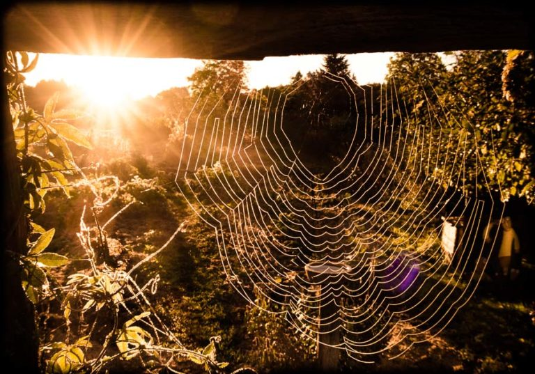 L'araignée, un auxiliaire comme l'abeille, le ver de terre ou le renard !