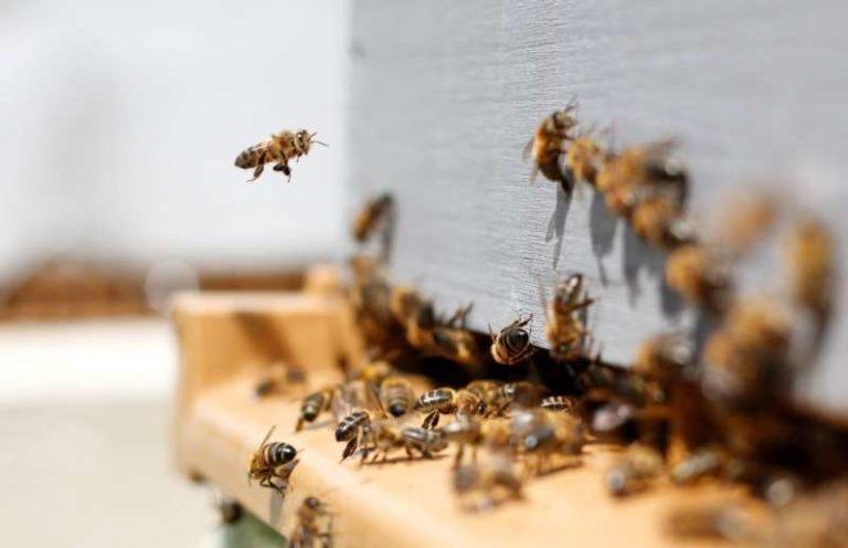 Il y a 970 espèces d'abeilles en France !