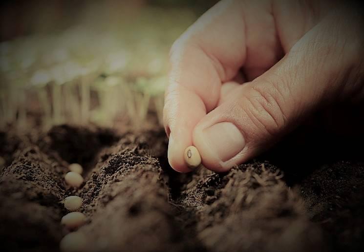 Quelle est la bonne date pour réussir ses semis ?
