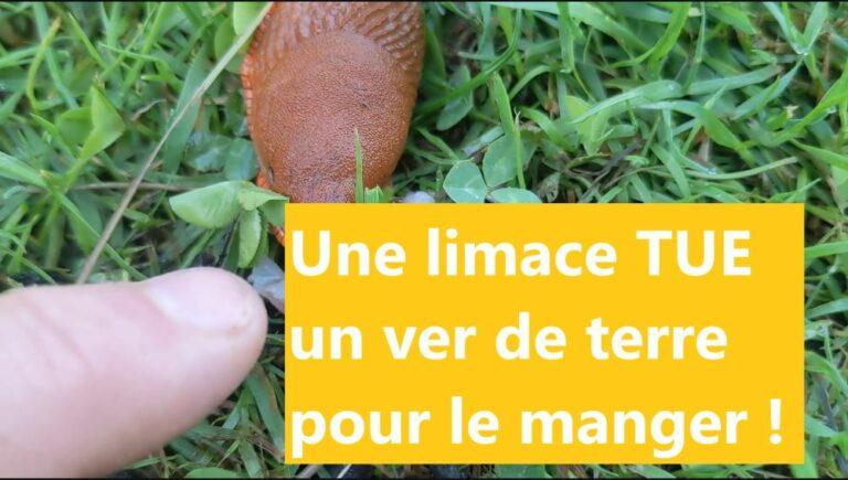 🌼 Une limace TUE un ver de terre pour le manger! La preuve en images.