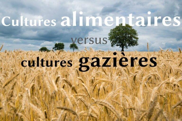 [ Méthanisation agricole ] Mes premières conclusions 😊